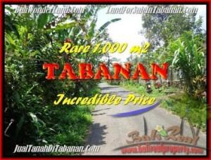 TANAH MURAH di TABANAN BALI 1.000 m2 di Tabanan Pupuan