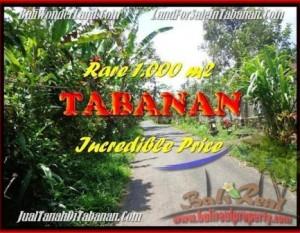 TANAH DIJUAL MURAH di TABANAN 10 Are di Tabanan Pupuan