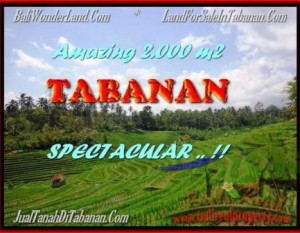 JUAL TANAH MURAH di TABANAN BALI 2.000 m2  View sawah gunung dan laut