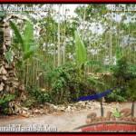 TANAH MURAH JUAL di TABANAN BALI 30 Are View kebun
