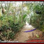 JUAL TANAH di TABANAN 2,500 m2 View kebun