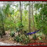 TANAH MURAH JUAL di TABANAN BALI 25 Are View kebun