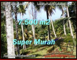 TANAH MURAH di TABANAN BALI 75 Are di Tabanan Selemadeg