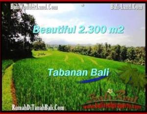 TANAH di TABANAN BALI DIJUAL MURAH 23 Are di Tabanan Selemadeg