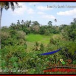 TANAH JUAL MURAH TABANAN 3,000 m2 View Sawah dan Sungai