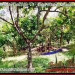 JUAL TANAH MURAH di TABANAN BALI Untuk INVESTASI TJTB206