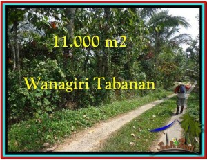 TANAH MURAH di TABANAN BALI 11.000 m2  View Kebun