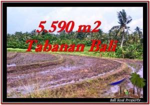 JUAL TANAH MURAH di TABANAN BALI 5,590 m2  View sawah dan laut