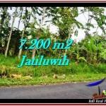 JUAL TANAH MURAH di TABANAN 7,200 m2 View Gunung, sawah