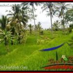 TANAH MURAH DIJUAL di TABANAN BALI 32 Are di Tabanan Jatiluwih