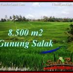 TANAH MURAH JUAL di TABANAN BALI 8,500 m2 View sawah