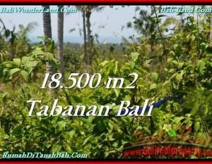 TANAH di TABANAN BALI DIJUAL MURAH Untuk INVESTASI TJTB232