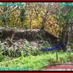 TANAH di TABANAN JUAL MURAH 41 Are View sawah dan Kebun