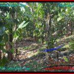 TANAH MURAH JUAL di TABANAN BALI 54 Are View Kebun