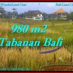 JUAL TANAH MURAH di TABANAN 9.8 Are di Tabanan Selemadeg