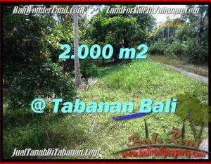 TANAH di TABANAN BALI DIJUAL MURAH 2,000 m2  View Kebun