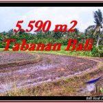 TANAH di TABANAN JUAL MURAH 55.9 Are View sawah dan laut