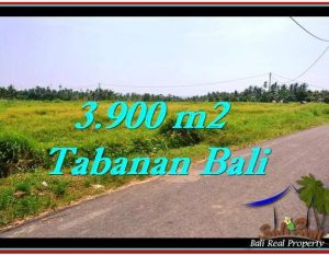 TANAH MURAH JUAL di TABANAN BALI 39 Are View sawah dan laut
