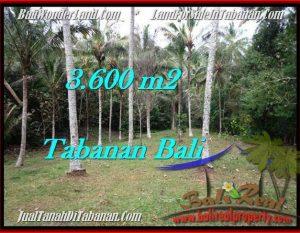 JUAL TANAH di TABANAN 3,600 m2  View Kebun