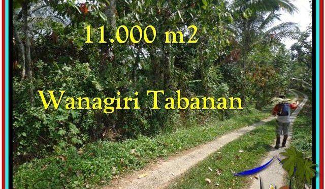 TANAH DIJUAL MURAH di TABANAN 11.000 m2 di Tabanan Selemadeg
