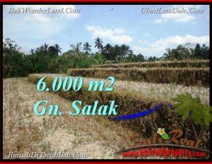 TANAH DIJUAL MURAH di TABANAN 6,000 m2 di Tabanan Selemadeg