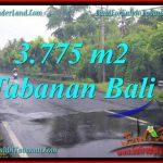 TANAH di TABANAN BALI DIJUAL MURAH Untuk INVESTASI TJTB271