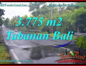JUAL TANAH MURAH di TABANAN BALI 3,775 m2 di Tabanan Selemadeg