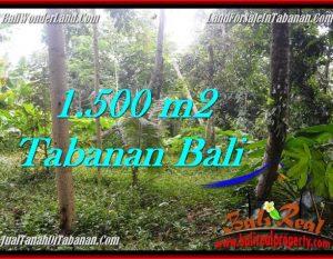 TANAH JUAL MURAH  TABANAN 1,500 m2  View kebun