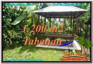 JUAL TANAH MURAH di TABANAN BALI 1,200 m2  View kebun dan sungai