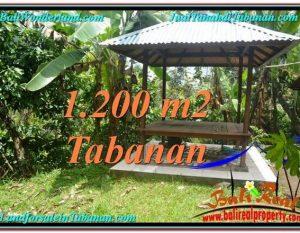 TANAH di TABANAN DIJUAL 1,200 m2 di Tabanan Penebel