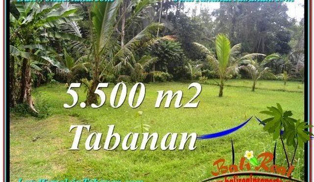 TANAH DIJUAL MURAH di TABANAN 55 Are di Tabanan Penebel