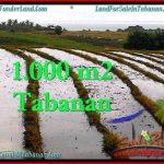 TANAH di TABANAN BALI DIJUAL MURAH Untuk INVESTASI TJTB261