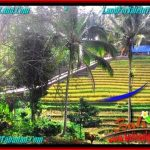 TANAH MURAH di TABANAN BALI DIJUAL 33 Are di Tabanan Selemadeg