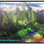 TANAH di TABANAN JUAL MURAH 25 Are View Sawah dan Sungai