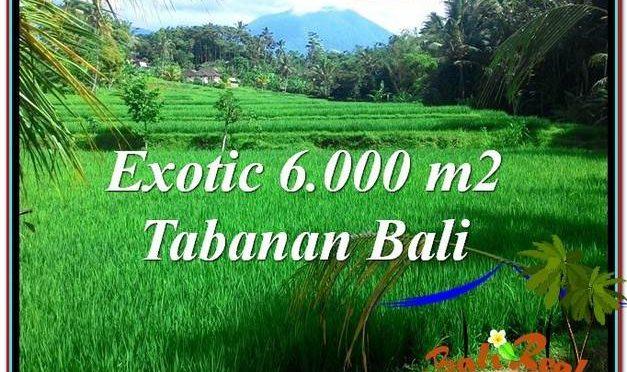 TANAH DIJUAL MURAH di TABANAN 6,000 m2 di Tabanan Penebel