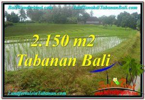 TANAH di TABANAN JUAL MURAH 2,150 m2 View gunung dan sawah