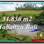 JUAL TANAH MURAH di TABANAN BALI 51,850 m2 di Tabanan Selemadeg