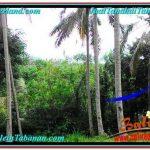 TANAH DIJUAL MURAH di TABANAN Untuk INVESTASI TJTB290