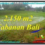 JUAL MURAH TANAH di TABANAN 21.5 Are View gunung dan sawah