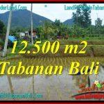 DIJUAL MURAH TANAH di TABANAN 125 Are di Tabanan Penebel