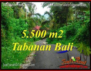 DIJUAL TANAH MURAH di TABANAN BALI 55 Are di Tabanan Penebel