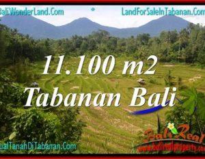 TANAH MURAH di TABANAN 11,100 m2 di Tabanan Penebel