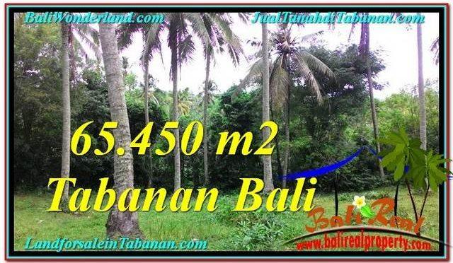 JUAL TANAH MURAH di TABANAN BALI TJTB290