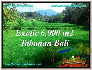 TANAH MURAH DIJUAL di TABANAN BALI 60 Are di Tabanan Penebel