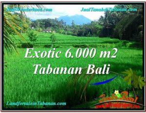 TANAH di TABANAN BALI DIJUAL MURAH Untuk INVESTASI TJTB306
