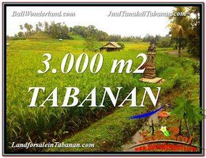 TANAH MURAH  di TABANAN BALI DIJUAL 30 Are View gunung dan sawah