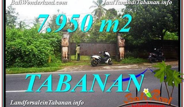 TANAH MURAH JUAL di TABANAN BALI 79.5 Are View Kebun