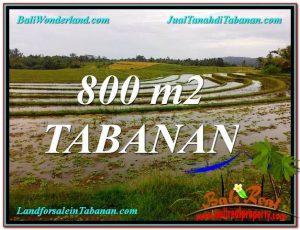TANAH MURAH di TABANAN DIJUAL 800 m2 di Tabanan Selemadeg