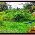 JUAL MURAH TANAH di TABANAN 50 Are View Kebun