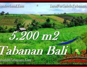 TANAH di TABANAN JUAL MURAH 5,200 m2  View sawah dan sungai